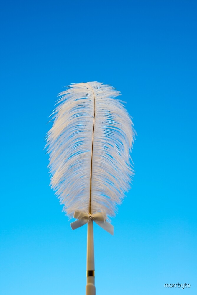 white feather on blue by morrbyte