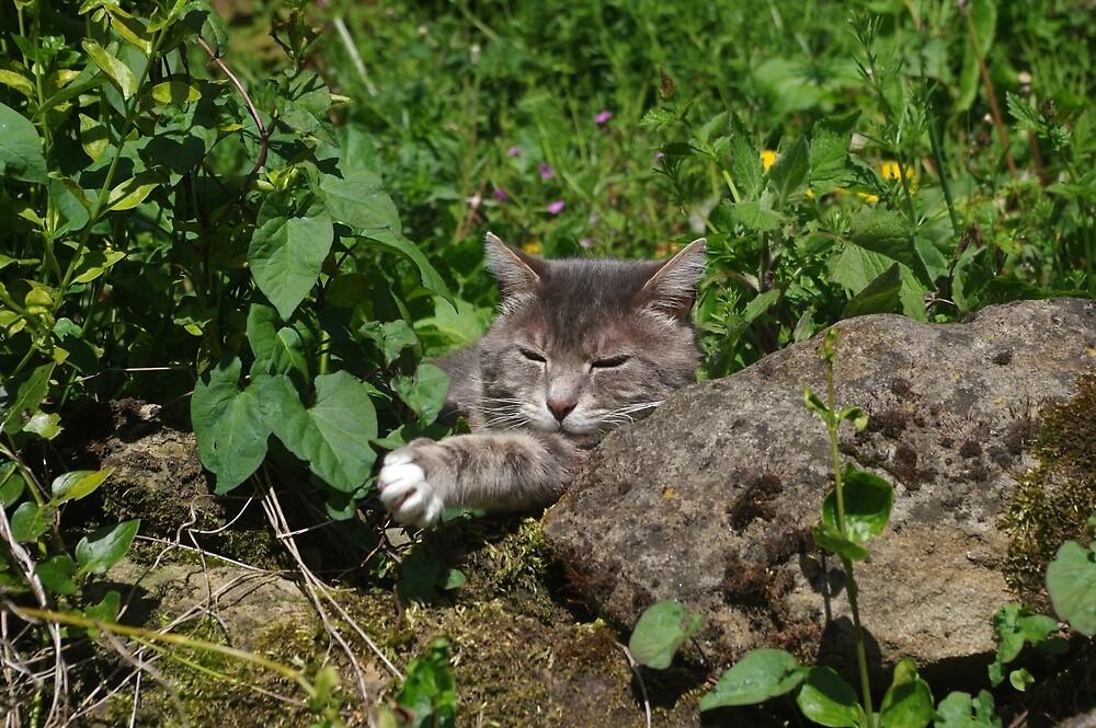 Tabby cat sitting in garden by turniptowers
