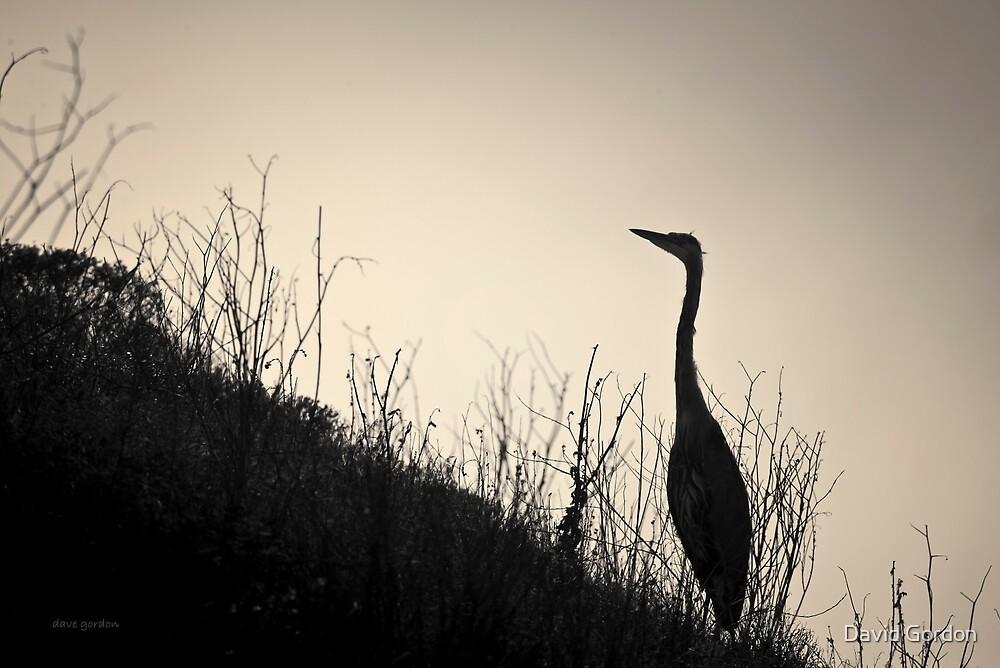 Great Blue Heron I Toned by David Gordon