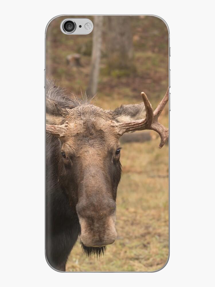 Bull moose in a fall landscape by Josef Pittner