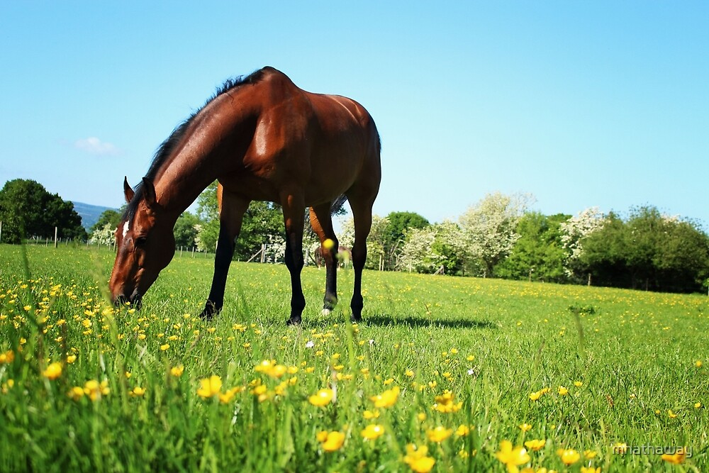 Horse in summer field grazing by mhathaway