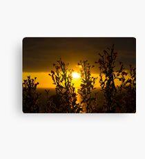 wild atlantic way sunset through wild flowers Canvas Print