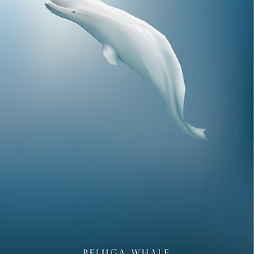 Beluga whale swimming under the cold arctic blue ocean by dystopia