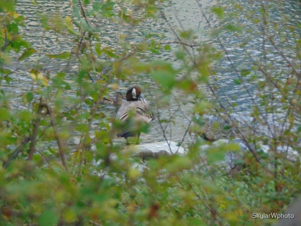 Hiding Goose by SkylarWphoto