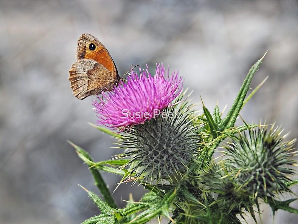 Meadow Brown On Thistles by Susie Peek