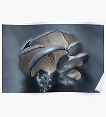Shelf Fungus in Blue Poster