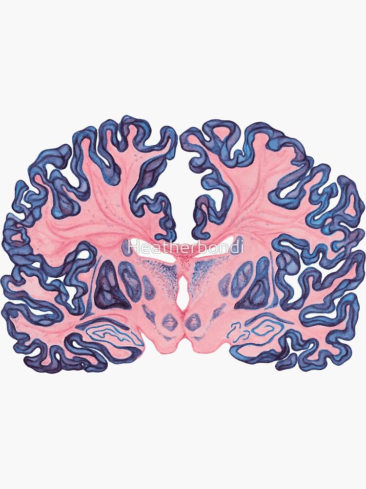 Gyri and Swirls of Human Brain by Heatherbondi