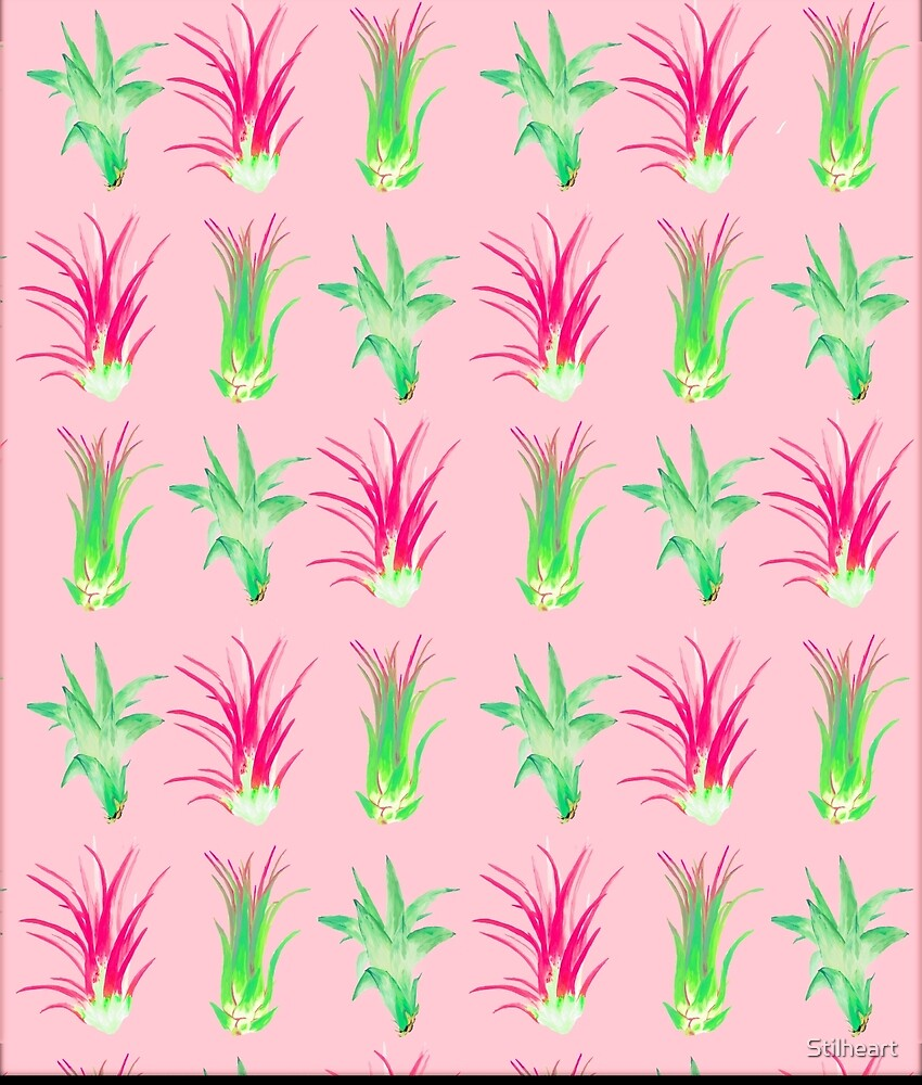 Airplants on pink by Stilheart