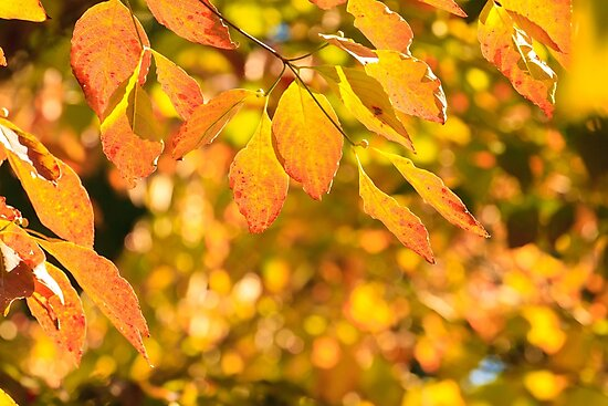 Autumn Colors by bengraham