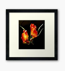 Tangerine Colored Freesia Blooms Framed Print