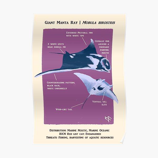 Giant Manta Ray Poster Poster