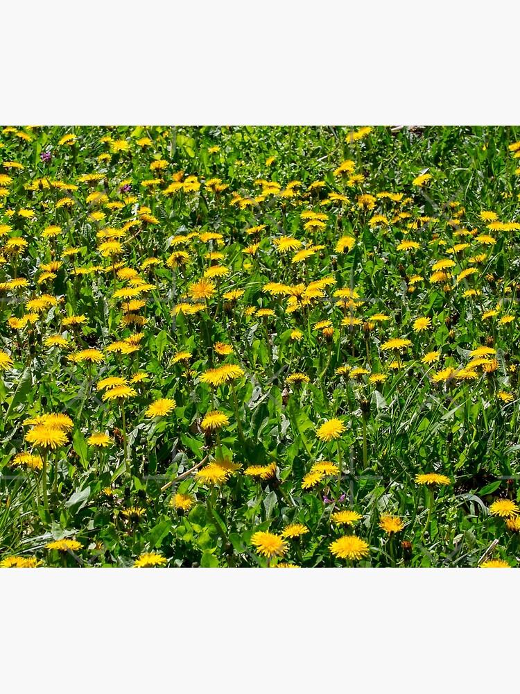 Yellow Dandelion Field Fine Art Photography by CWartDesign