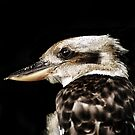 Kookaburra by larry flewers
