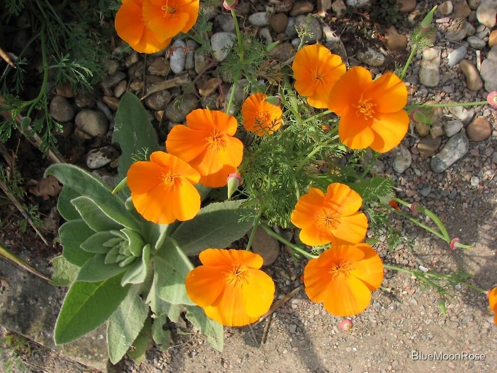 Färbe mich orange! California Poppies von BlueMoonRose