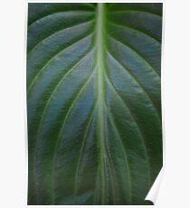 Tropical leaf macro close up Poster