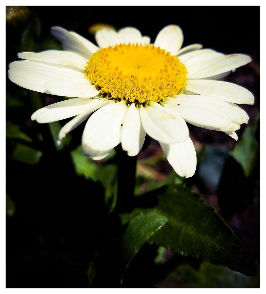 Daisy by MBNerd2003