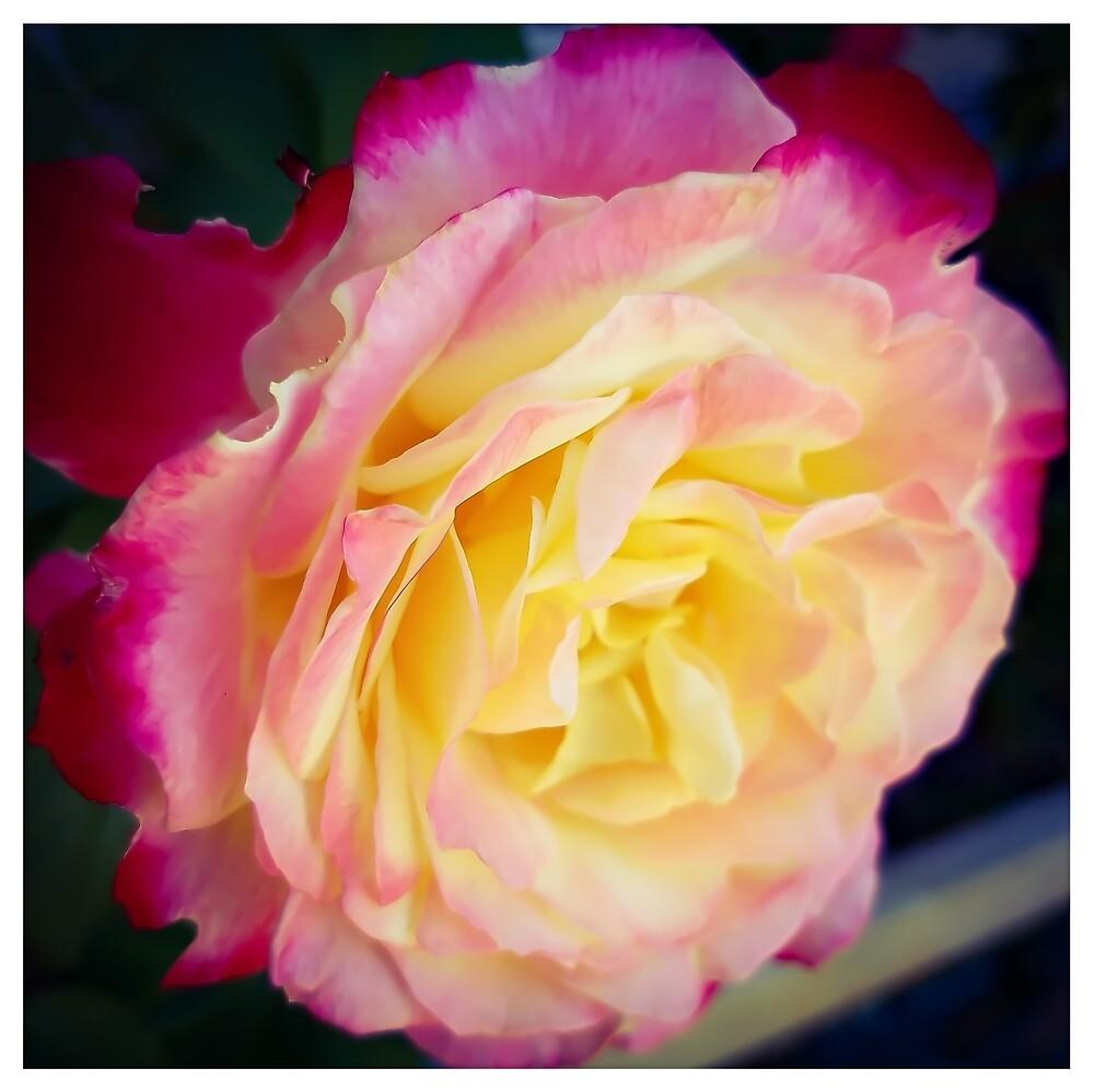 Flower 4 by MBNerd2003