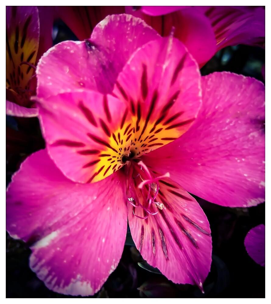 Flower 8 by MBNerd2003
