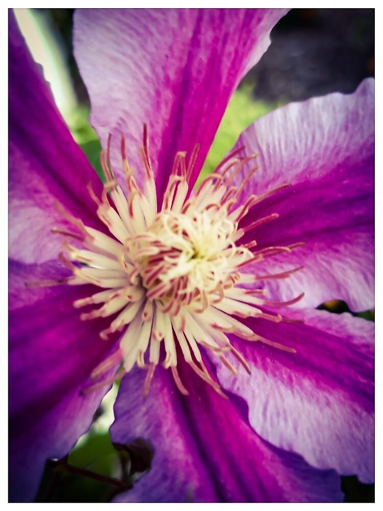 Flower 9 by MBNerd2003
