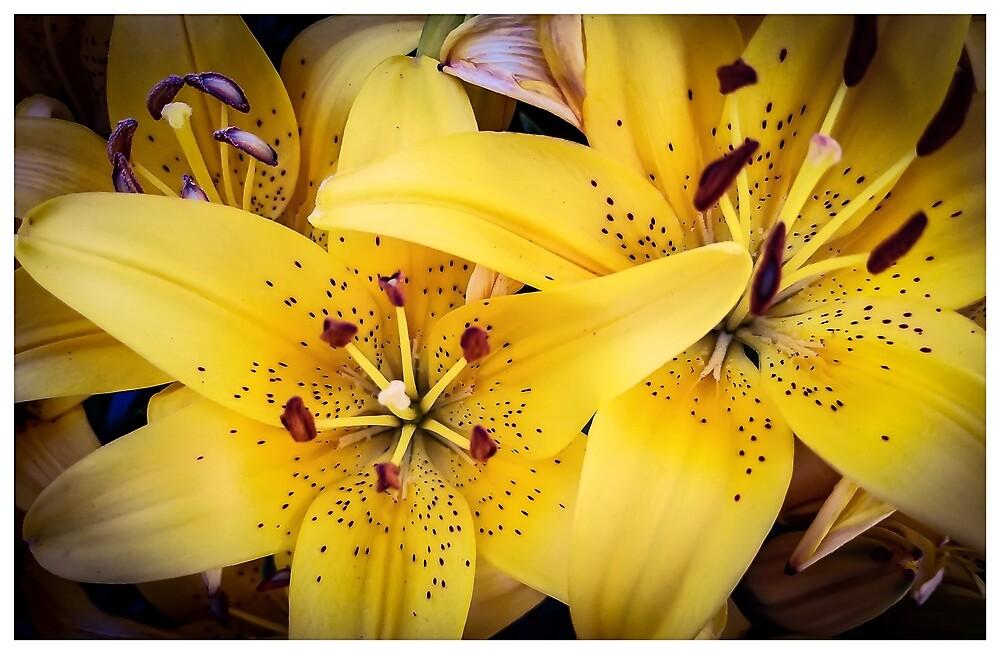 Lillies by MBNerd2003