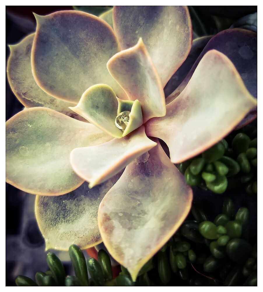 Succulents 4 by MBNerd2003