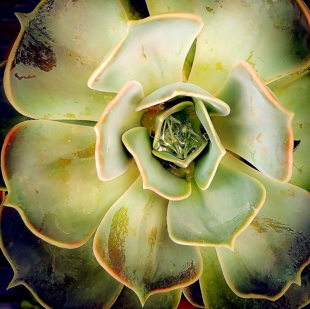 Succulents 6 by MBNerd2003