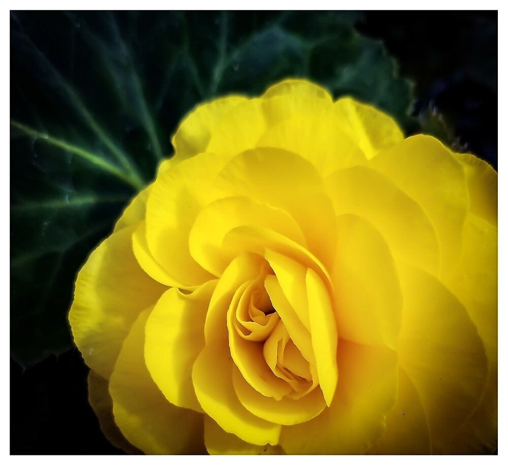 Yellow Flower by MBNerd2003