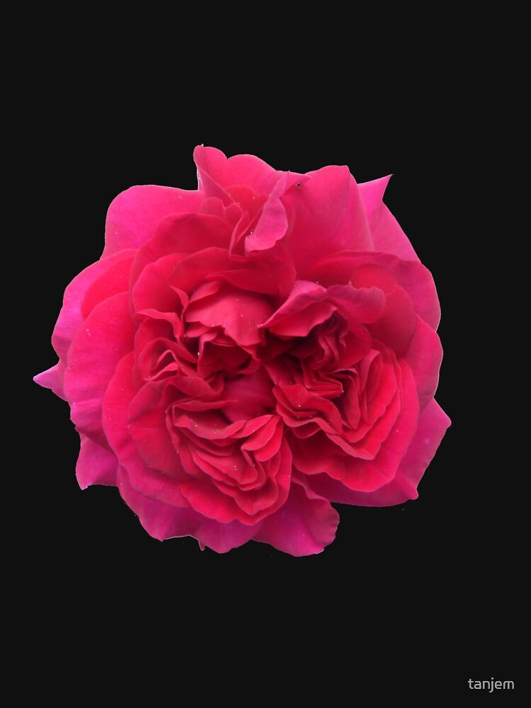 Red Rose by tanjem