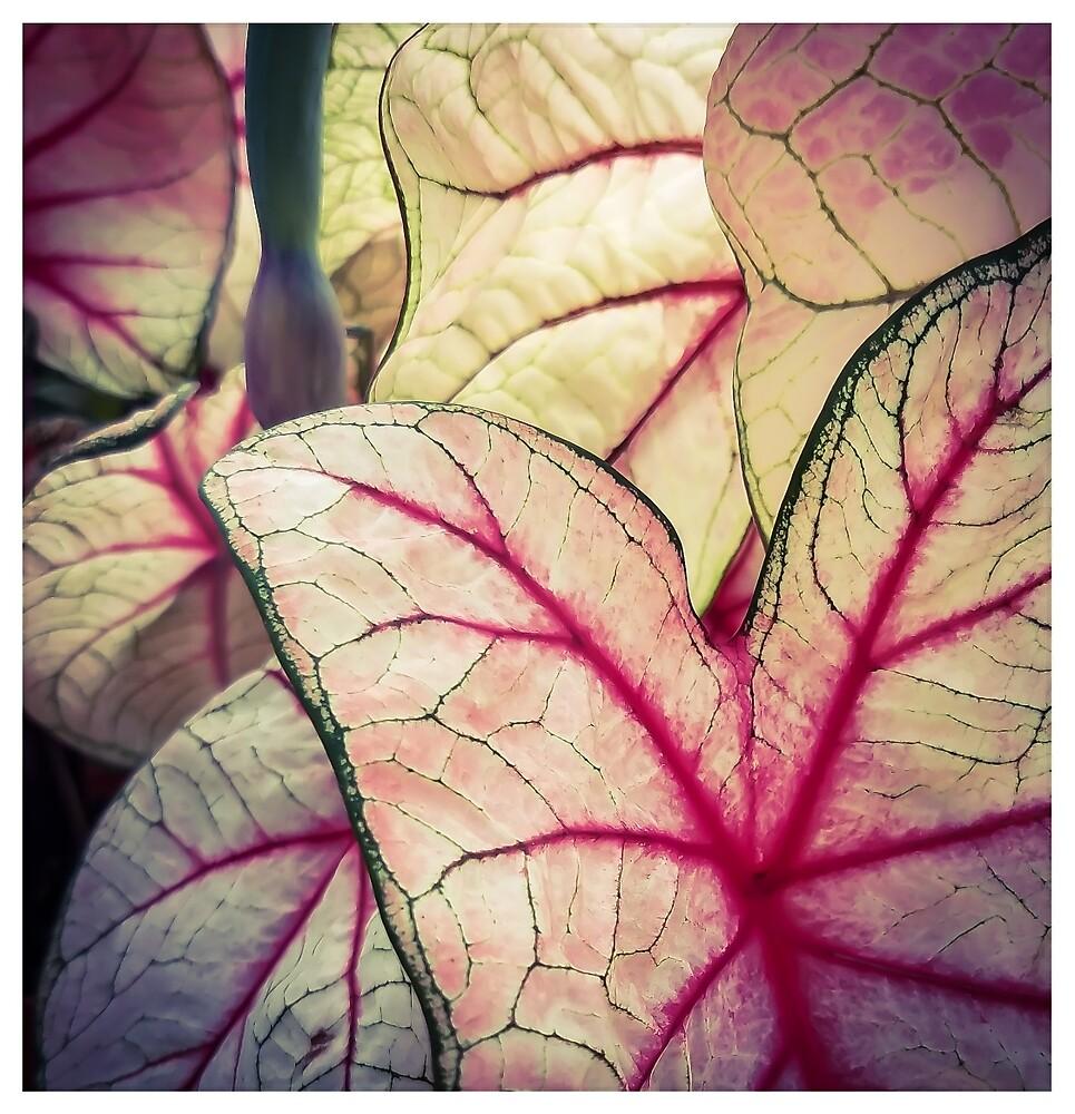 Pink Foliage by MBNerd2003