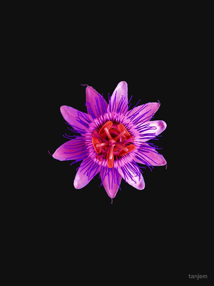 Passion in Purple by tanjem