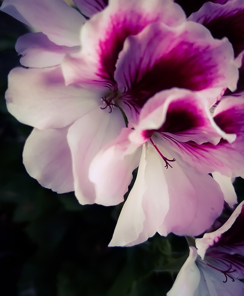 Flowers 6 by MBNerd2003