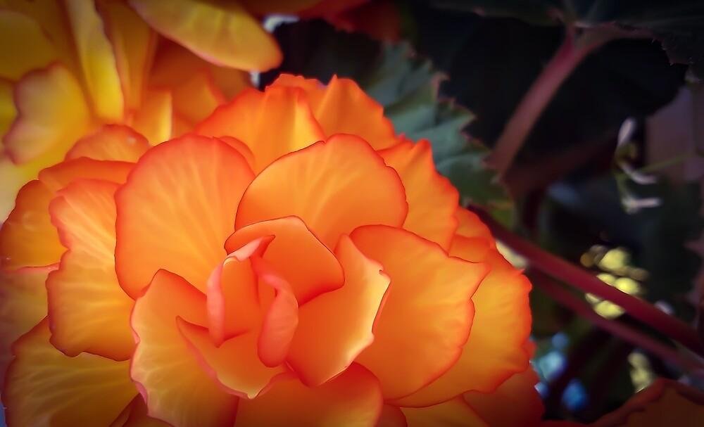 Orange Beauty by MBNerd2003