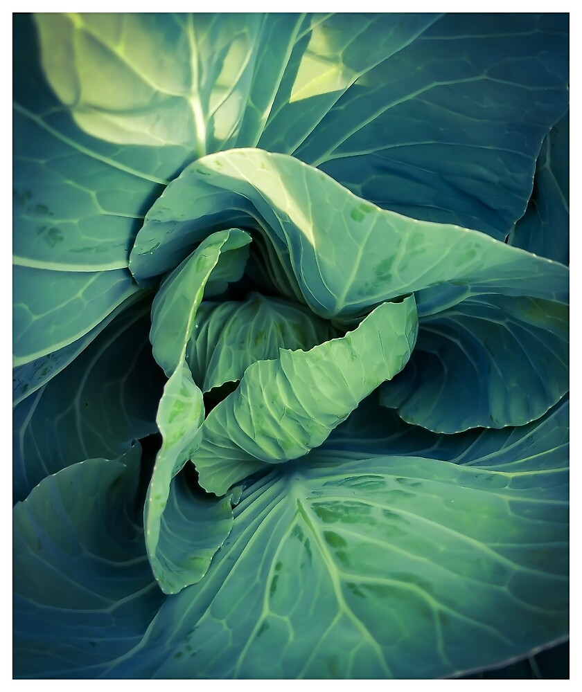 Lettuce by MBNerd2003