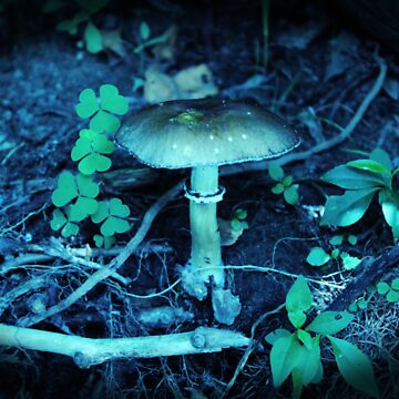 Lomography Mushroom Photography by ckdesigns