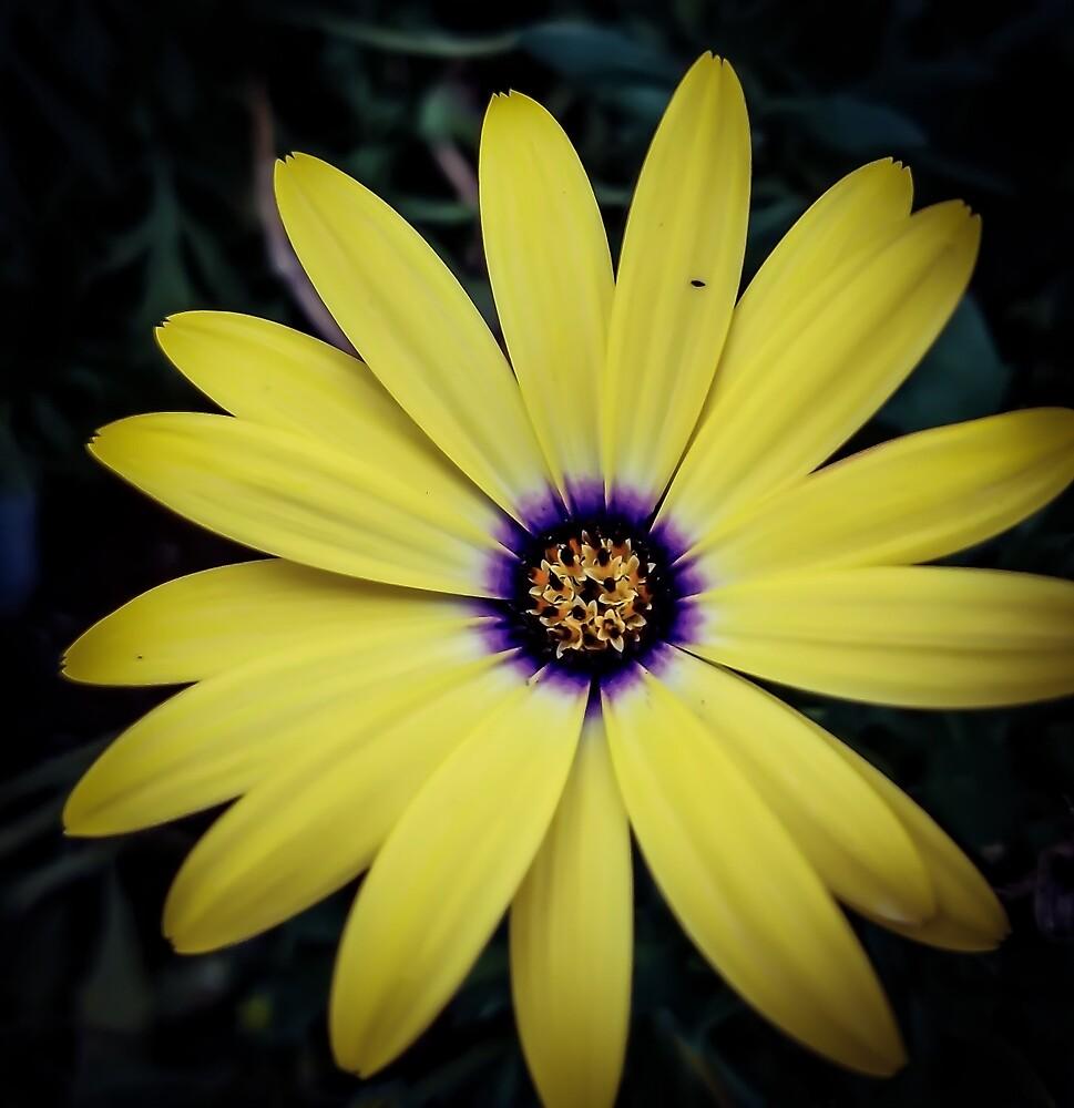 Flower 23 by MBNerd2003