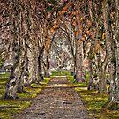 Saint Mary's Cemetery Missoula, Montana by beckam81