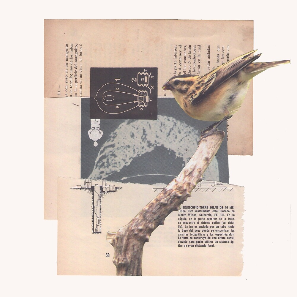 Sunbird by andresired