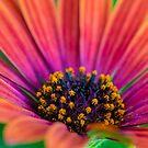 Pollen by Keith G. Hawley