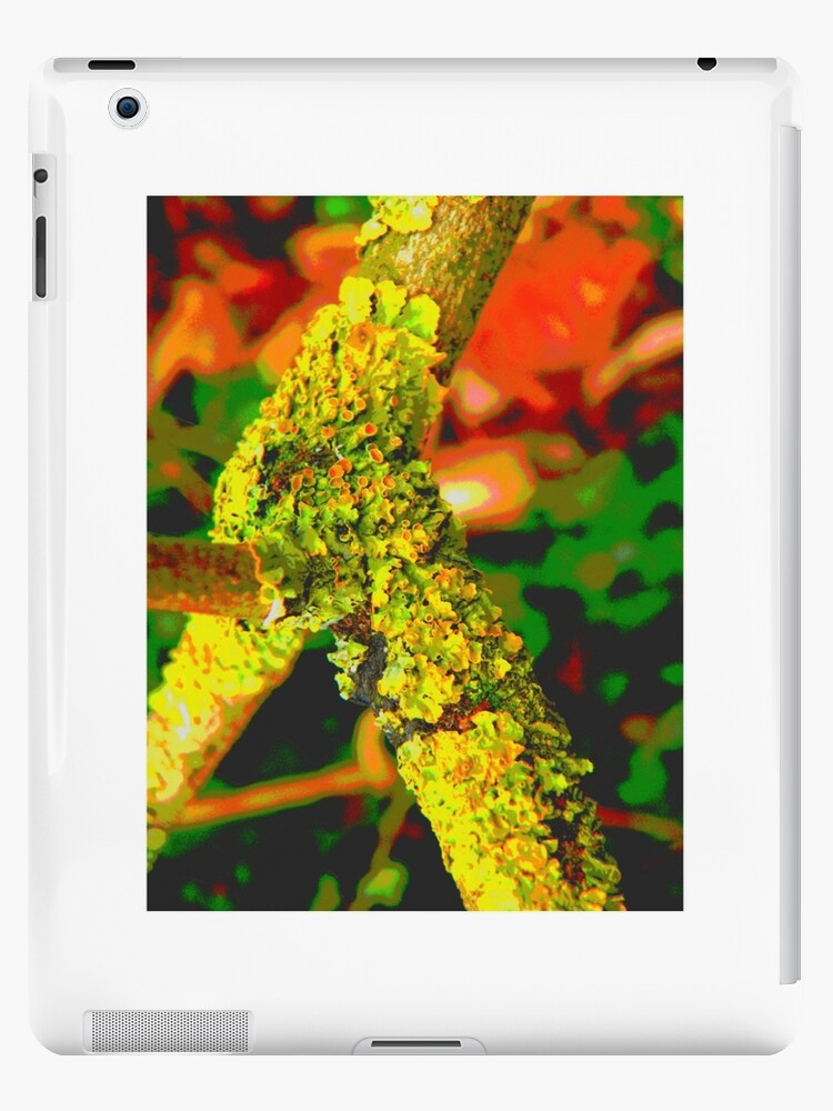 lichen by vicki humphreys