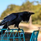 Curious Crow by IsithombePhoto