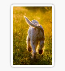 Orange and White Italian Spinone Dog in Action Sticker