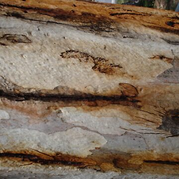 Gum Tree Bark by synthmax