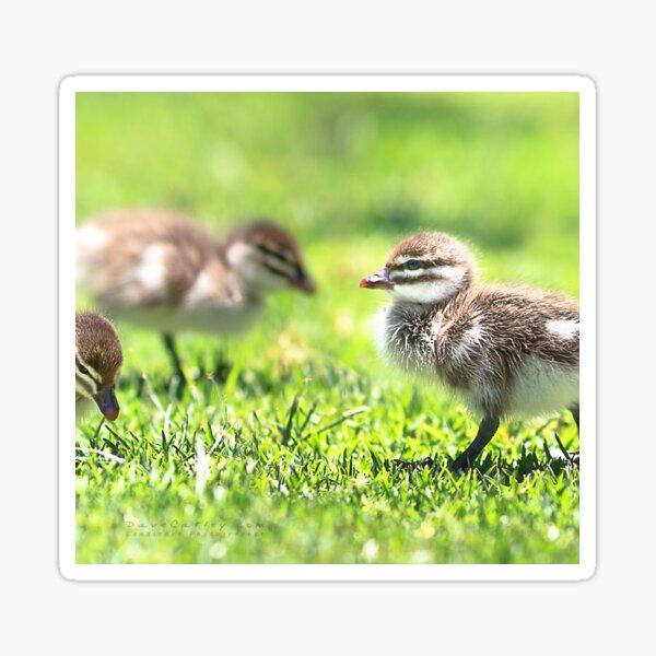 Yanchep Ducklings Sticker