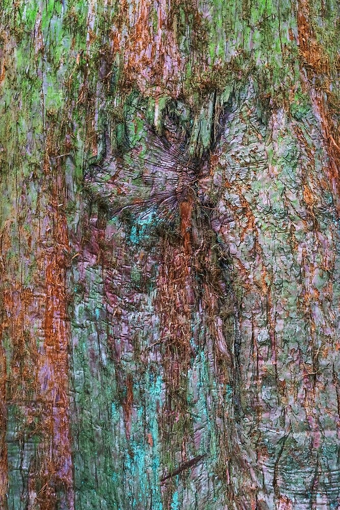 Tree bark. by Jengalese