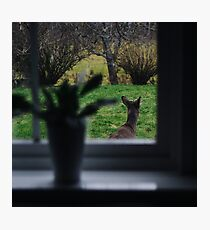 A deer on backyard adventures Photographic Print