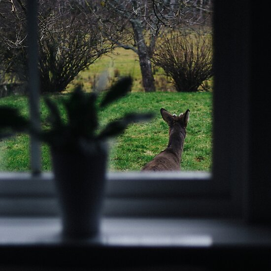 A deer on backyard adventures by Olof Ljunggren
