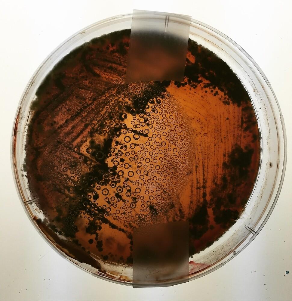 Bacteria  by morgsmiddleton