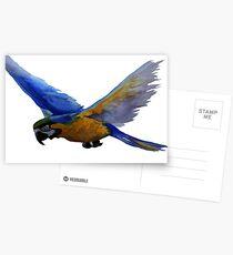 Parrot In Flight Postcards