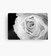 Macro of Yellow Rose Canvas Print