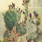 Greenhouse Cactus by OLIVIA JOY STCLAIRE